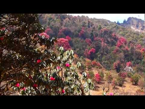 Rhododendrons near Ghorepani, Nepal (5MilesHigh.com)