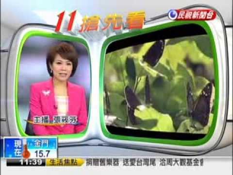 延續紫斑蝶生命  護送過國道-民視新聞 - YouTube