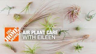 An air plant in a bowl.