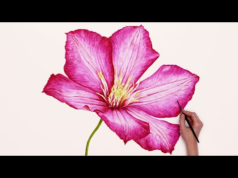 Big Realistic Flower in Watercolour - Time-lapse by Anna Mason