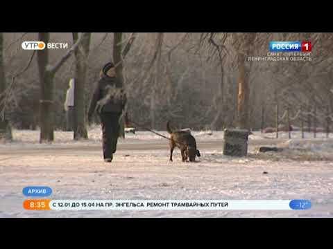 Вести Санкт-Петербург. Выпуск 8:35 от 14.01.2021