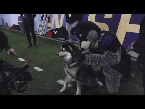 A Day in the Life of Dubs, the UW's mascot