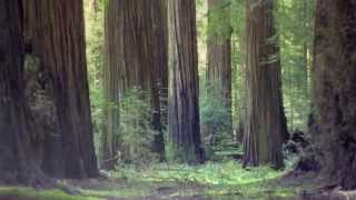 Growing is Forever - A Poem for The California Redwoods