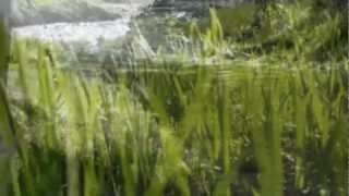 Komáromi Pisti: Tavaszi szél vizet áraszt...