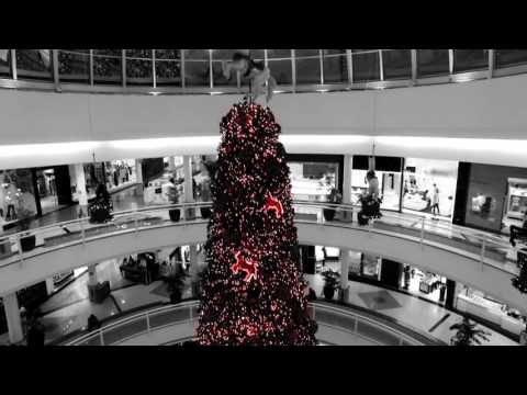 Natal Flamboyant