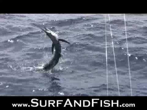 Extreme Marlin Fishing Nicaragua