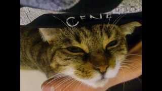 Nice animal photos compilation for testing Youtube-Video-Editor