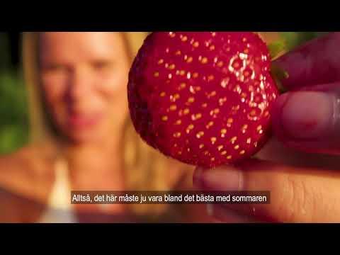 Sandra Bergqvist vloggar för Hallandstrafiken