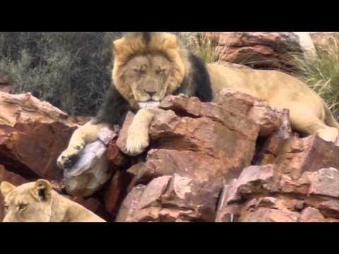Renedian riding africa 2011/2012