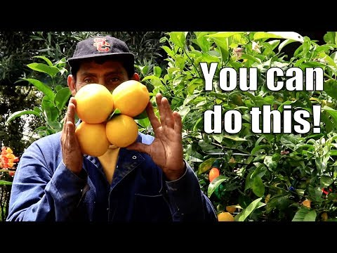 THIS is WHAT Hard WORK Brings! Bountiful Harvest | Urban Food Forest