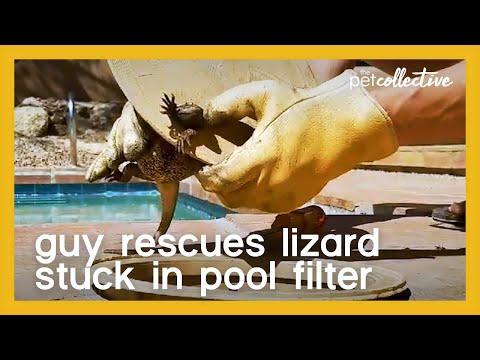Guy Rescues Lizard Stuck in Pool Filter