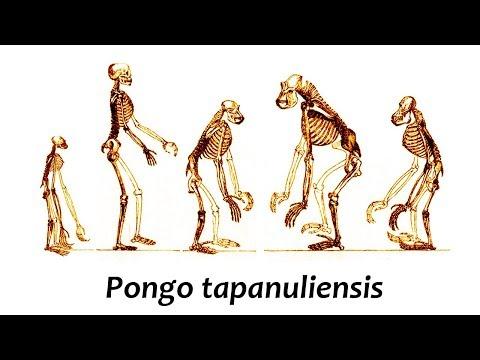 Descubierta nueva especie de homínido | Noticias 6/11/2017