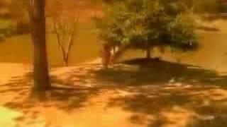 CRAZY (Julio Iglesias)