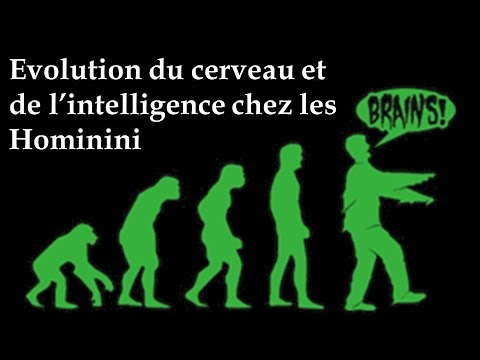 Evolution du cerveau et de l'intelligence chez les Hominini