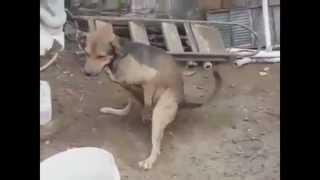 #1 PRIMEIRO VIDEO,GOOGLE TRADUTOR NARRANDO ACIDENTES