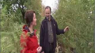 Mdr Garten Welche Bambussorte Ist Die Richtige Www Bambuswald De