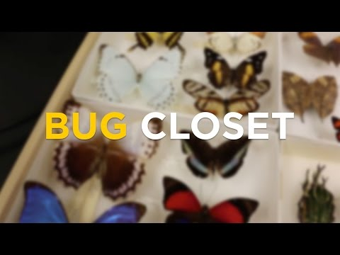 Take a Look into UCF College of Sciences' Bug Closet