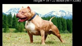 Top 15 gute und große Wachhunde der Welt