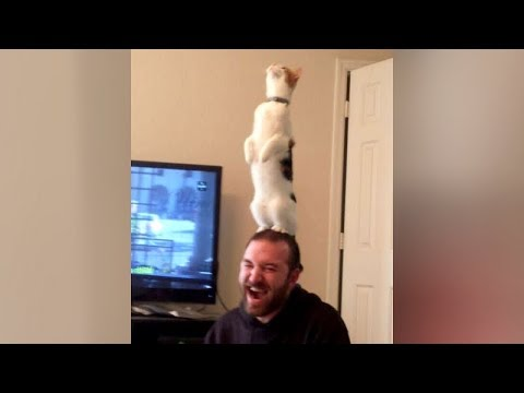 Are this the BEST CAT FAILS YOU'VE EVER SEEN or what?! - Extremely FUNNY CAT compilation