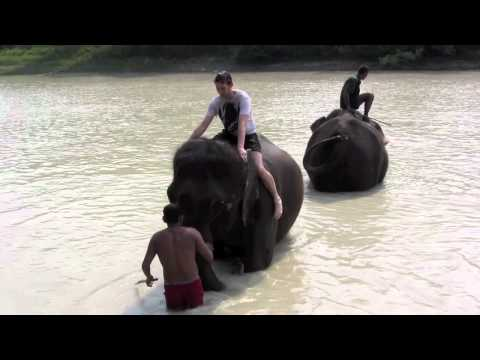 Cooling off with the elephants