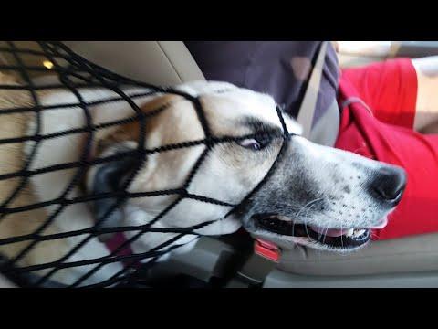 FailFactory: Derpy Dogs (March 2019) | FailArmy
