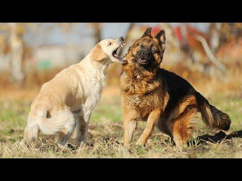 4 Safe Ways To Break Up A Dog Fight