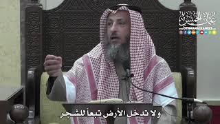 1303 - ولا تدخل الأرض تبعاً للشجر - عثمان الخميس