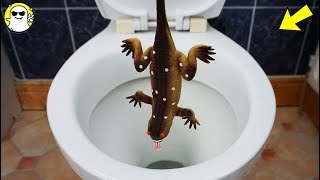 Will it Flush? Realistic Rubber Lizard