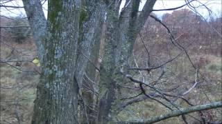 Self Filmed Iowa Bow Hunt BBD! | Big Bidness Outdoors