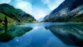 Video Relaxante  - som de floresta