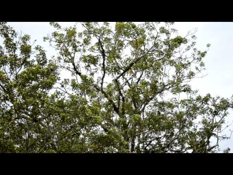 Affen im Naturschutzgebiet Los Guatuzos