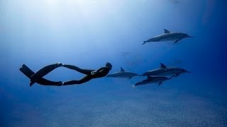 Freediving with Dolphins in Hawaii