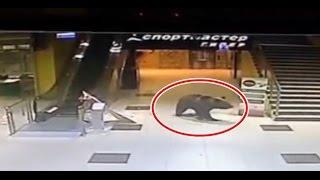 CCTV BERUANG MASUK MALL !! Pengunjung Kocar Kacir !!