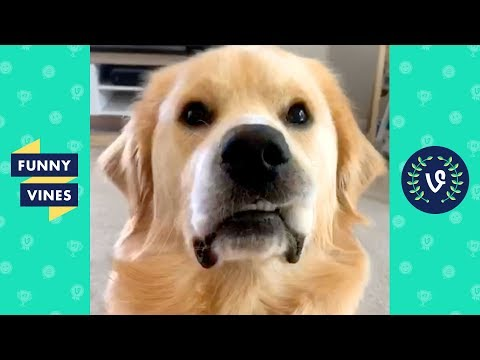 TRY NOT TO LAUGH - Funny Animal Videos of the week!