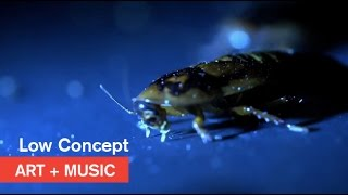 Low Concept - Bugz - Art + Music - MOCAtv