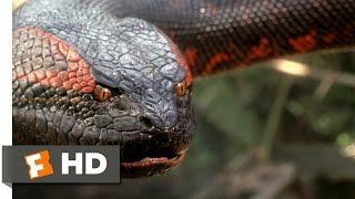 Anaconda (8/8) Movie CLIP   Swallowed Whole (1997) HD