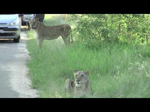 Lions, Elephants, Giraffes, Oh My!