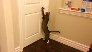 """""""Clever Cats Opening Doors Compilation""""    CFS"""