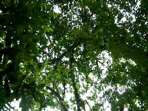 Bosque Majales