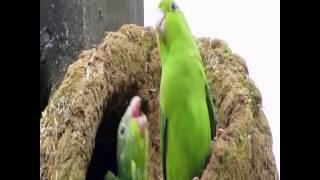 Birds dancing to Pump It by Black Eyed Peas! | ORIGINAL