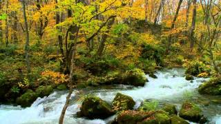 Nature Sounds Autumn Stream Oirase