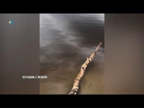В сети Интернет появились свежие кадры с реки Колва