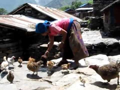 2012 – Chalisegaon 1 (Nepal) – Woman Feeding Chickens