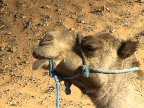Wyzwanie Maroko – PUSTYNIA CHEBBI Wakacje Na Fali