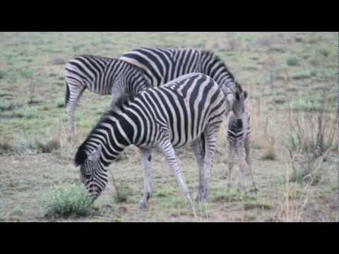Safari 2011 – 2 of 6 – Ivory Tree Lodge, SA