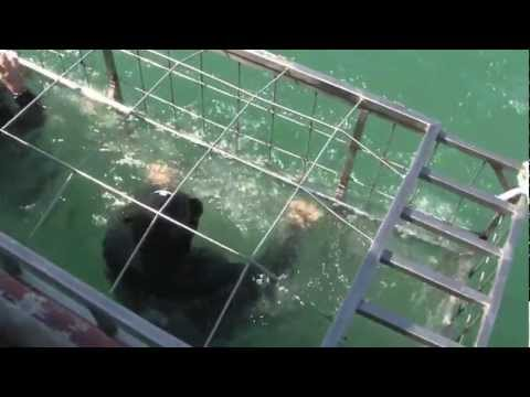 2013 Extreme Travel: Swimming with Sharks