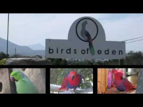 Birds of Eden – Plettenberg Bay, South Africa