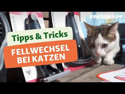 Fellwechsel bei Katzen - so könnt ihr eure Katze unterstützen