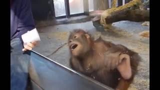 Amazed Monkey wow