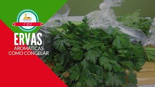 Como eu congelo minhas ervas aromáticas  - Culinaria direto da Italia